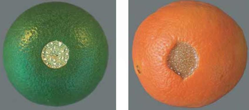 Citrus Scarring