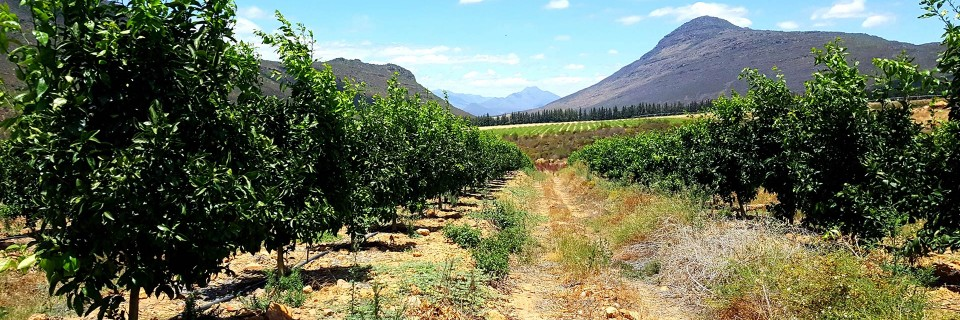 Independent citrus consultation service for optimal production practices.