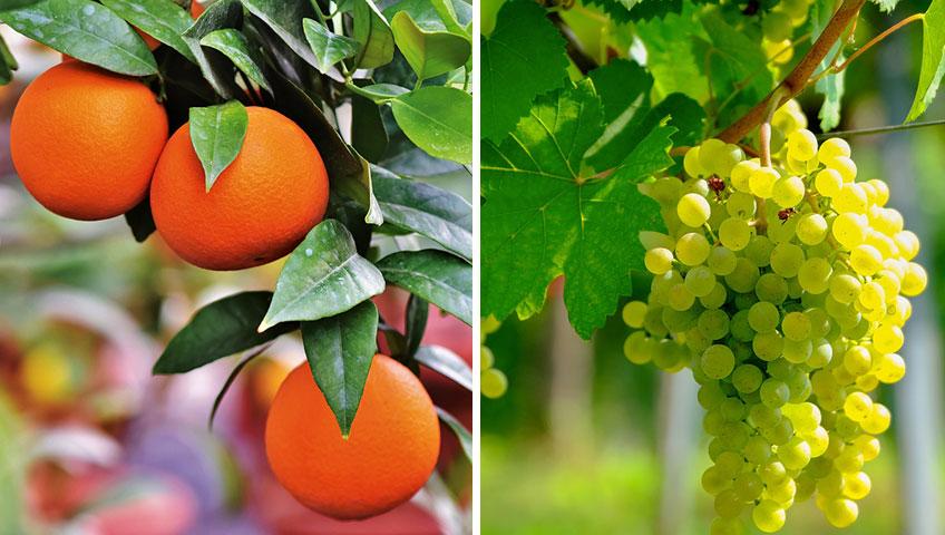 Greater varieties