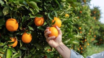 Citrus Exports